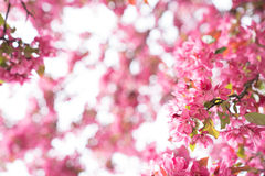 Wspaniała kwiat rama Obraz Stock
