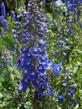 Wspaniały kwiatostan obraz royalty free