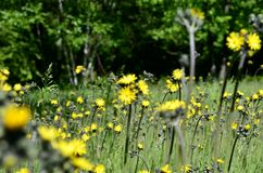 Wspaniały las Fotografia Royalty Free