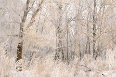 Wspaniały mróz na drzewach Zdjęcie Royalty Free