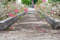 Wspaniały widok naturalni kwiaty przy Historycznym zabytkiem Zdjęcie Stock