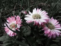Wspaniali kombinacja kwiaty obrazy royalty free
