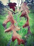 Wspaniali kombinacja kwiaty fotografia royalty free
