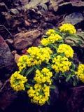 Wspaniali kombinacja kwiaty obraz stock