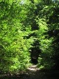 Wspaniali krzaki w Kolońskim lesie fotografia royalty free