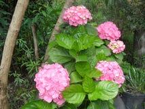 wspaniali kwiaty w zielonej naturze obraz royalty free