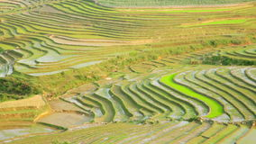 wspaniali rolni pola, ryżowy irlandczyk tarasują, Sapa, Wietnam zbiory