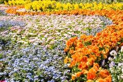 Wspaniali wiosna kwiaty obraz stock