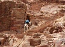 Wspinać się na horseback jar Zdjęcie Royalty Free
