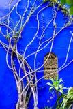 Wspinać się rośliny na błękita okno z złotym gretingiem i ścianie obraz stock