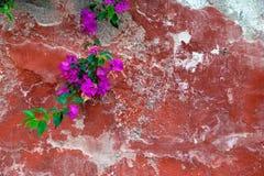 Wspinać się rośliny na starej czerwieni ścianie kosmos kopii Obraz Stock