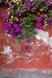 Wspinać się rośliny na starej czerwieni ścianie kosmos kopii Obraz Royalty Free