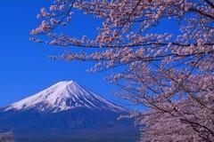 Wspina się Fuji i czereśniowych okwitnięcia z niebieskim niebem od Fuji Kawaguchiko miasteczka Japonia obrazy royalty free