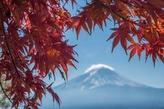 Wspina się Fuji i jesień liście klonowych, Kawaguchiko jezioro, Japonia Zdjęcie Stock