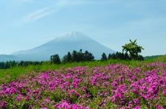 Wspina się Fuji i różowi mech przy Japan, selekcyjnej ostrości plama f obraz stock