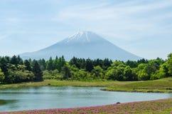 Wspina się Fuji i różowi mech przy Japan, selekcyjnej ostrości plamy przedpole zdjęcie royalty free