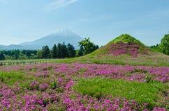 Wspina się Fuji i różowi mech przy Japan, selekcyjnej ostrości plamy przedpole obraz royalty free