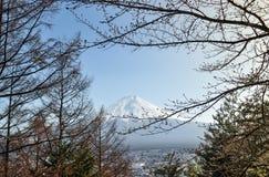 Wspina się Fuji widok z gałąź drzewo w Japan Zdjęcie Stock