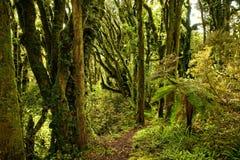 Wspina się Taranaki, wulkan w północnej wyspie Nowa Zelandia, przeważnie zakrywa chmurami szczyt, z primaeval zielonym lasem zdjęcie stock