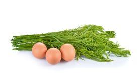 Wspinaczkowy Chrustowy, Akacjowy, OM z jajkami obrazy royalty free