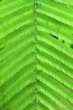 Wspinaczkowy Chrustowy liść Obraz Stock