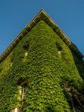 Wspinaczkowy winograd na budynku Obraz Royalty Free