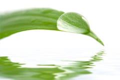 Wässern Sie Tropfen auf einem Blatt, das des Wassers sich reflektiert Lizenzfreie Stockfotografie