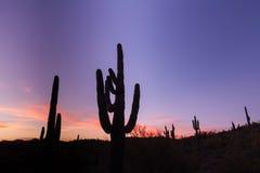 Wüste Saguaro-Sonnenuntergang Stockfotos