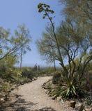 Wüsten-Weg, der zu blauen Himmel führt Stockbild
