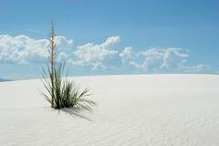 Wüstenpflanze in den weißen Sanddünen Lizenzfreie Stockfotografie