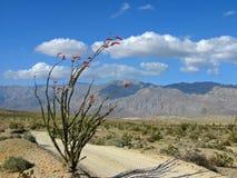 Wüstenspur mit Ocotillo Stockfotos