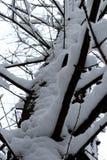 wszystkie jakaś elementów ilustracyjny indywidualny przedmiotów skala rozmiaru śnieg drzewa wektor zdjęcia stock