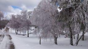 wszystkie jakaś elementów ilustracyjny indywidualny przedmiotów skala rozmiaru śnieg drzewa wektor Obraz Stock