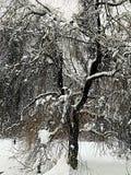 wszystkie jakaś elementów ilustracyjny indywidualny przedmiotów skala rozmiaru śnieg drzewa wektor Zdjęcie Royalty Free