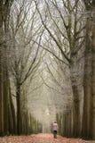 Wszystkie liście spadali od dębowych drzew w lesie daje osamotnionemu felling ten męski wycieczkowicz Zdjęcia Stock