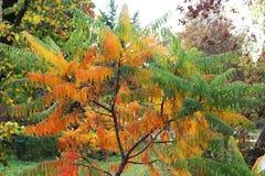 Wszystkie mój kolory dla jesieni fotografia stock