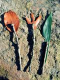 Wszystkie naturalni rozwidlenie, łyżka i nóż, Obraz Royalty Free