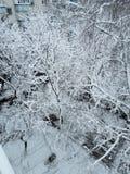 Wszystkie zachwyty zima Fotografia Royalty Free