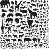 Wszystkie zwierzęta Afryka Obraz Royalty Free
