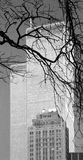 WTC - archival b&w picture 2000 Stock Images