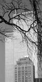 WTC - immagine archivistica 2000 del b&w Immagini Stock