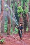 Wter tree Royalty Free Stock Photos