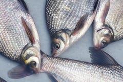 Wuchangfish Stock Photo