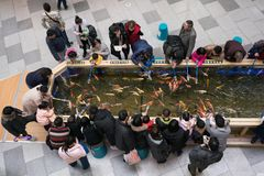 People feeding Koi amur carp in a pond with fish food inside a shopping mall in Wuhan China stock images