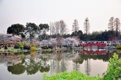 Wuhan, Kirschblütengarten stockbilder