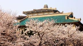 Wuhan universitetsområde av Kina Arkivbilder