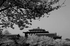 Wuhan universitetsområde av Kina Royaltyfria Bilder