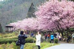 Wuling Farm cherry blossom season, Nantou, Taiwan Royalty Free Stock Photos