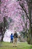 Wuling Farm cherry blossom season, Nantou, Taiwan Stock Photos