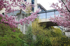 Wuling Farm cherry blossom season, Nantou, Taiwan Royalty Free Stock Photography